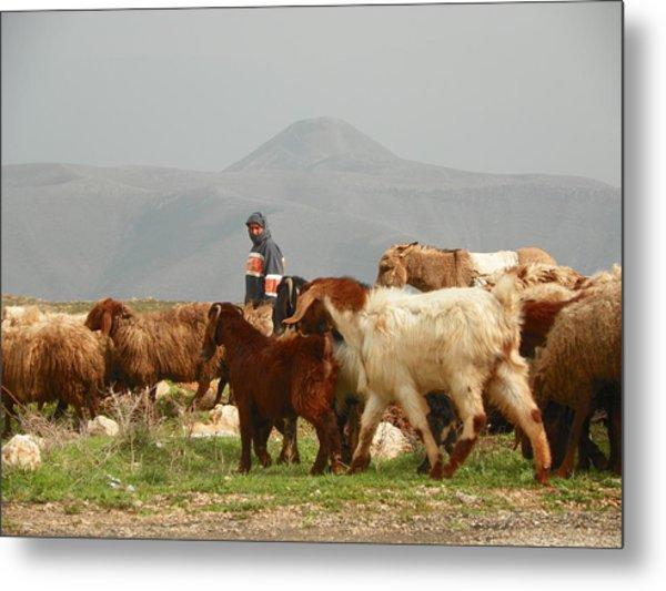 Goat Herder In Jordan Valley Metal Print by Noreen HaCohen