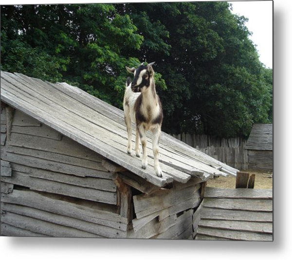 Goat On The Roof Metal Print