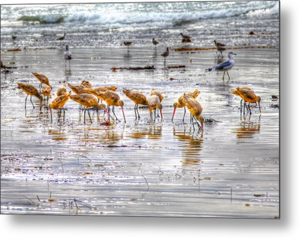 Godwits At San Elijo Beach Metal Print