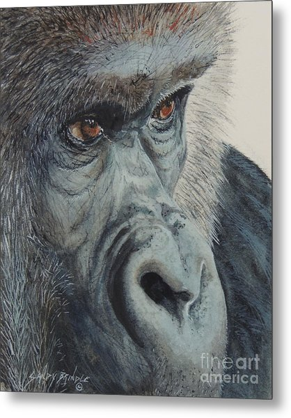 Going Ape...sold  Metal Print