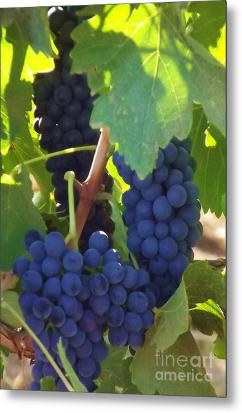 Golan Grapes Metal Print