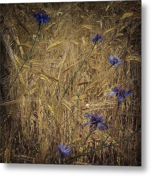 Gold And Blue Metal Print
