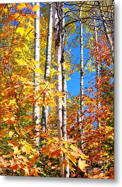 Metal Print featuring the photograph Gold Autumn by Cristina Stefan