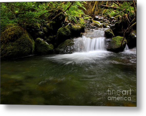 Gold Creek  Metal Print by Tim Rice