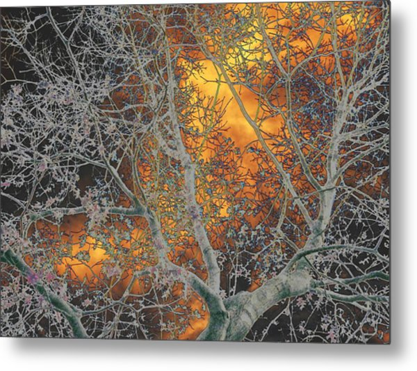 Gold In The Midst Of Winter Metal Print