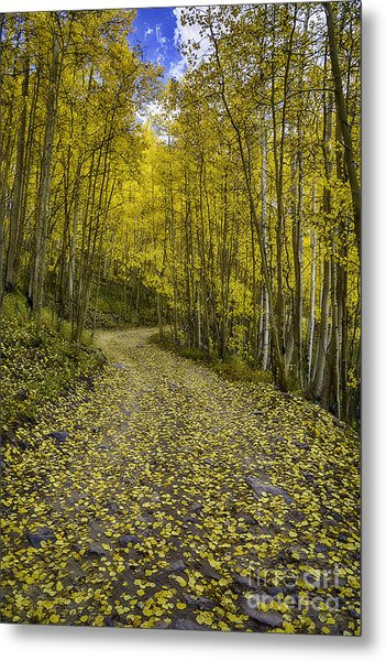 Golden Aspen Road Metal Print