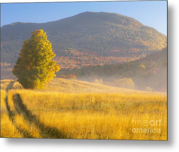 Golden Autumn Morning Metal Print