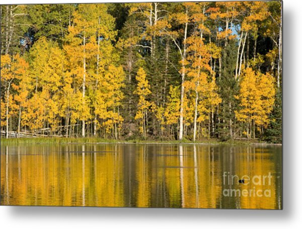Golden Autumn Pond Metal Print