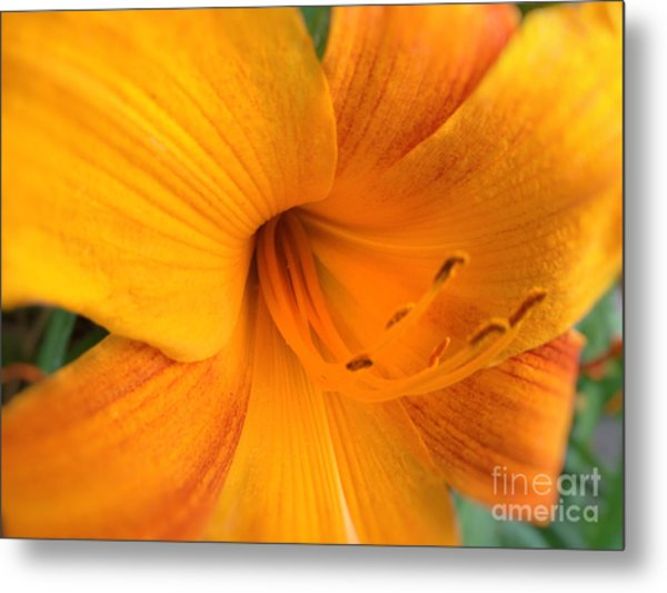 Golden Blossom Metal Print