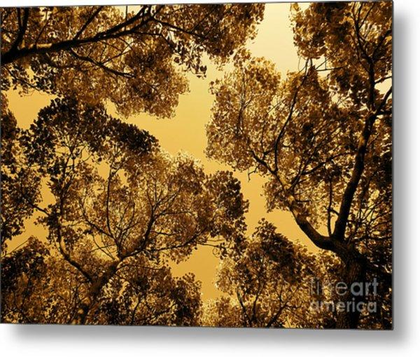 Golden Camphor Metal Print