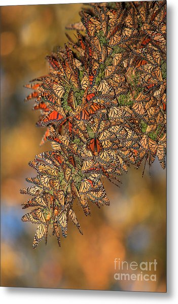 Golden Cluster Metal Print