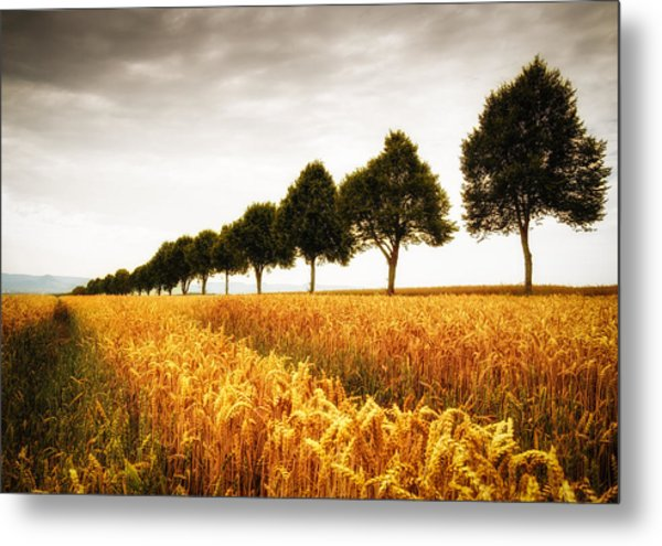 Golden Cornfield And Row Of Trees Metal Print