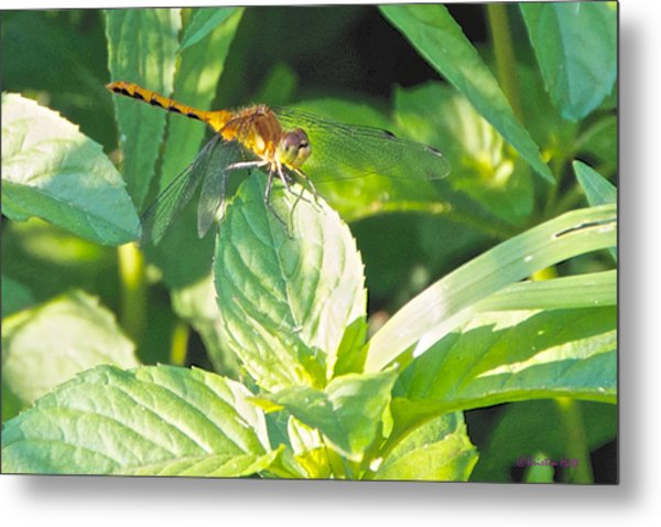 Golden Dragonfly On Mint Metal Print