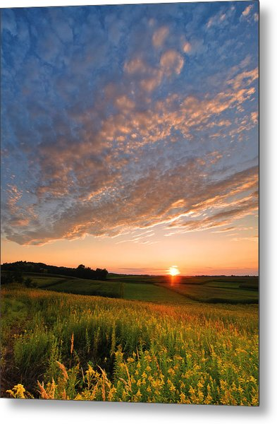 Golden Fields Metal Print