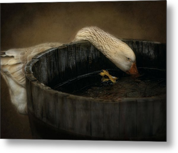 Golden Goose Metal Print by Robin-Lee Vieira