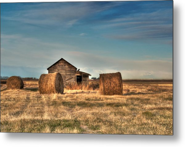 Golden Hay Metal Print