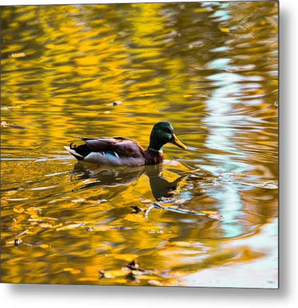 Metal Print featuring the photograph Golden   Leif Sohlman by Leif Sohlman