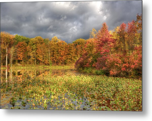 Golden Light And Autumn Leaves Metal Print
