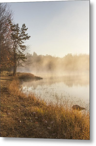 Golden Morning Metal Print