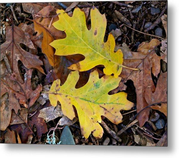 Golden Oak Leaf Duet Metal Print