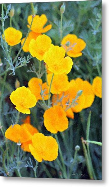 Golden Poppies Metal Print