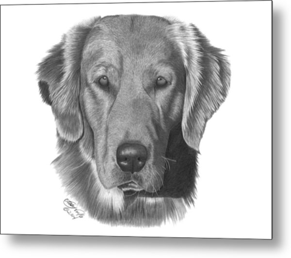 Golden Retriever - 026 Metal Print