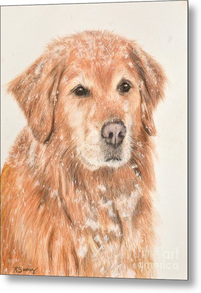 Golden Retriever In Snow Metal Print
