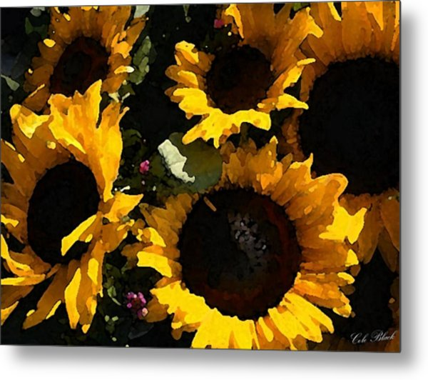 Golden Sunshine Metal Print by Cole Black