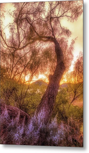 Golden Tree At The Quartz Mountains - Oklahoma Metal Print