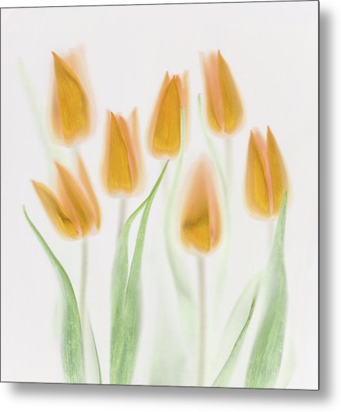 Golden Tulips Metal Print by Brian Haslam