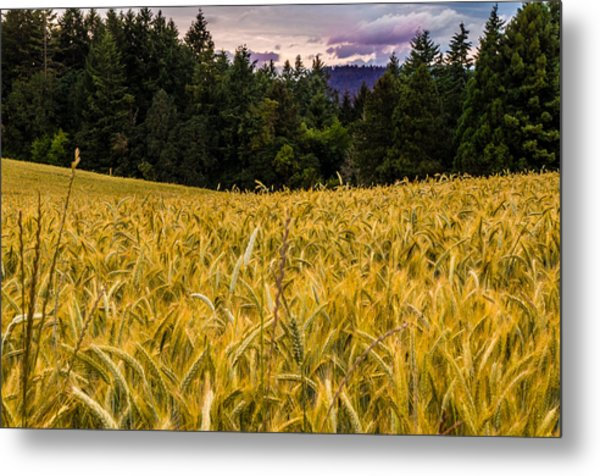 Golden Valley Metal Print by Denise Darby