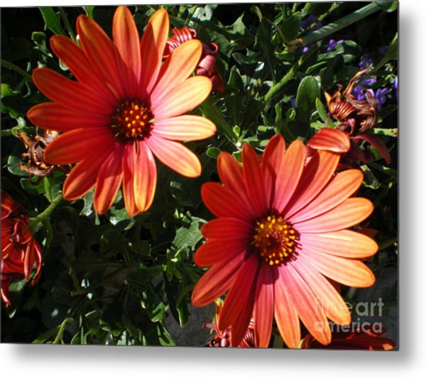 Good Morning Flower. Metal Print by Ann Fellows