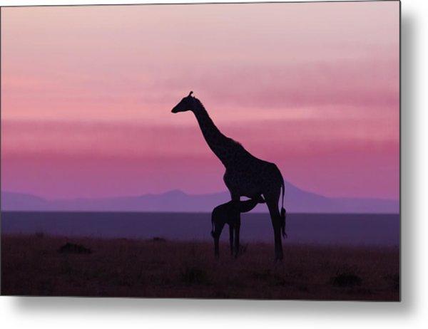 Good Morning Masai Mara 7 Metal Print