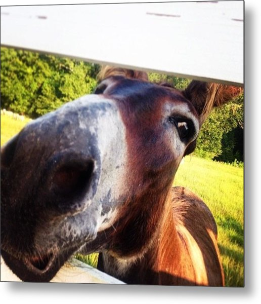 Good Morning People!! Donkey Says Hello Metal Print