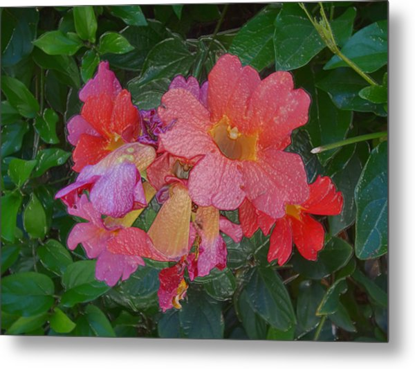 Goodnight With Love And Flowers  Metal Print by Kenneth James