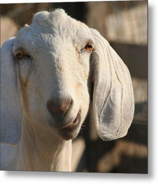 Goofy Goat Metal Print