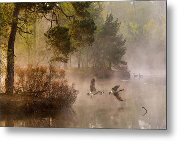 Goose Fight Metal Print