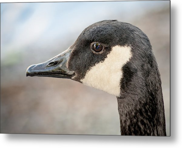 Goose Profile Metal Print