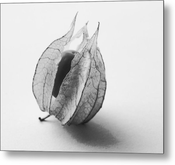 Gooseberry In Black And White Metal Print