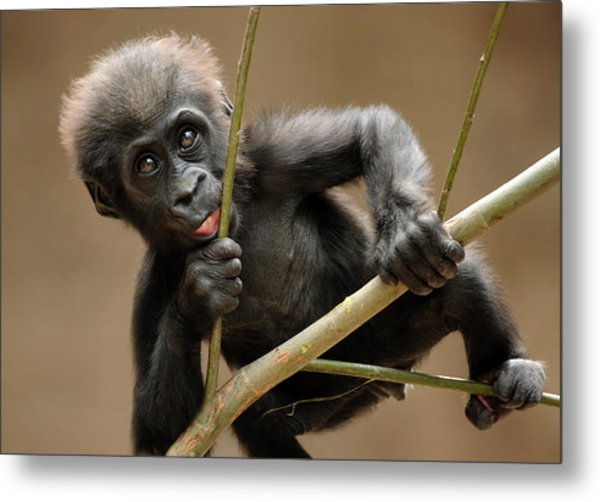 Gorilla Baby Metal Print by Freder