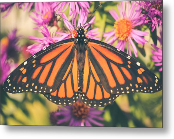 Grace And Beauty Metal Print