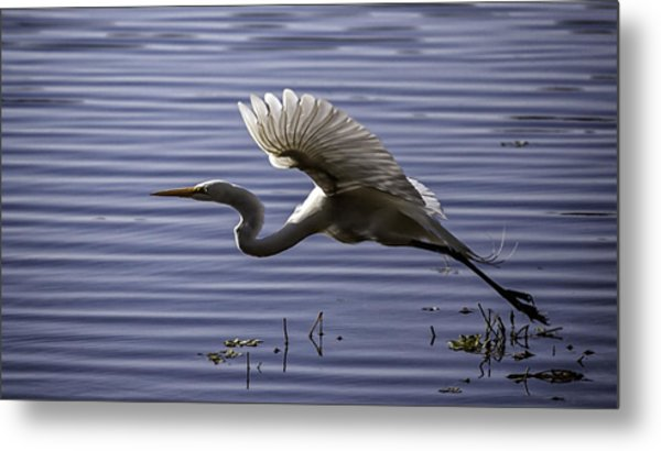 Grace In Motion Metal Print
