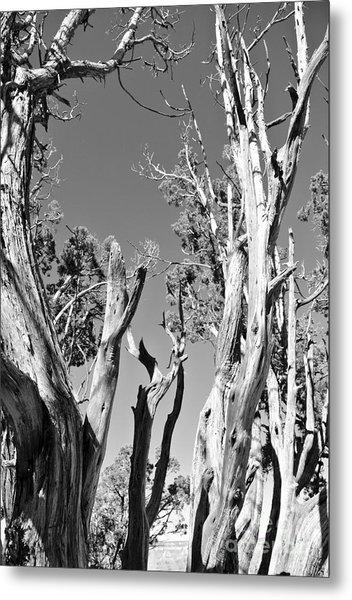 Grand Canyon Trees Metal Print