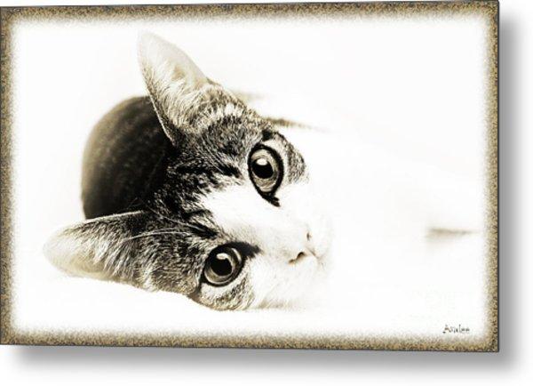 Grand Kitty Cuteness 3 High Key Metal Print