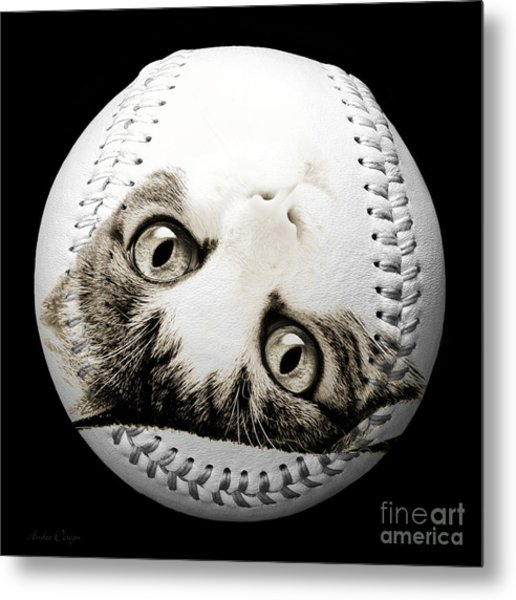 Grand Kitty Cuteness Baseball Square B W Metal Print