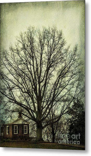 Grand Old Tree Metal Print