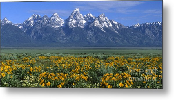 Grand Teton Summer Metal Print