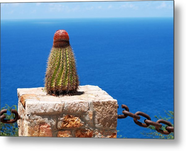 Grand Turk Cactus Metal Print