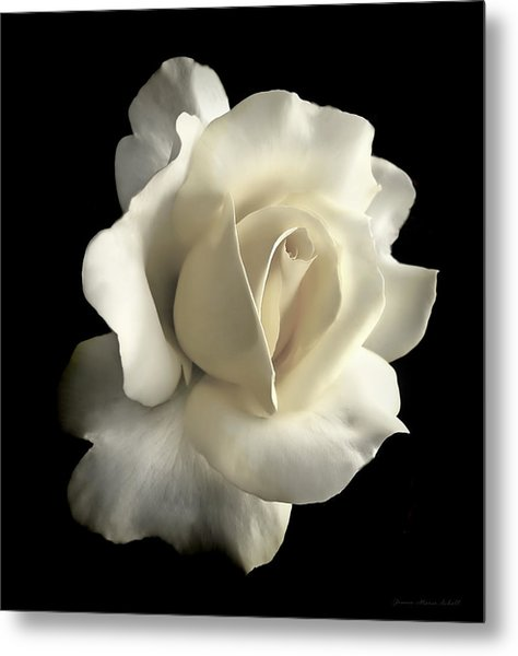 Grandeur Ivory Rose Flower Metal Print
