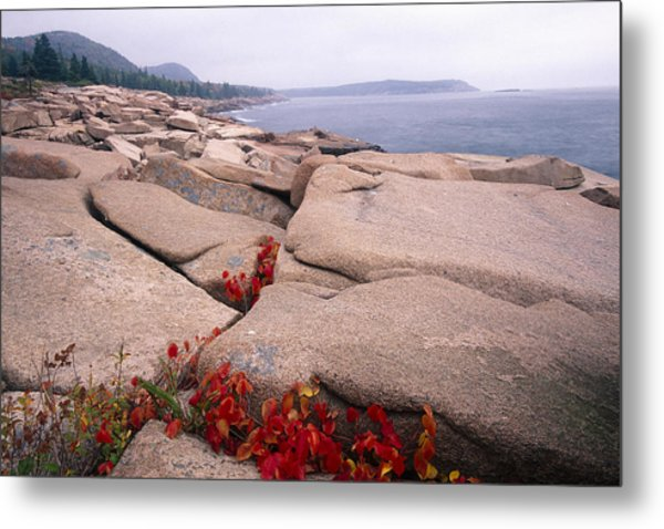 Granite Rocks Of Otter Point Acadia Natl Park Maine Metal Print by George Oze